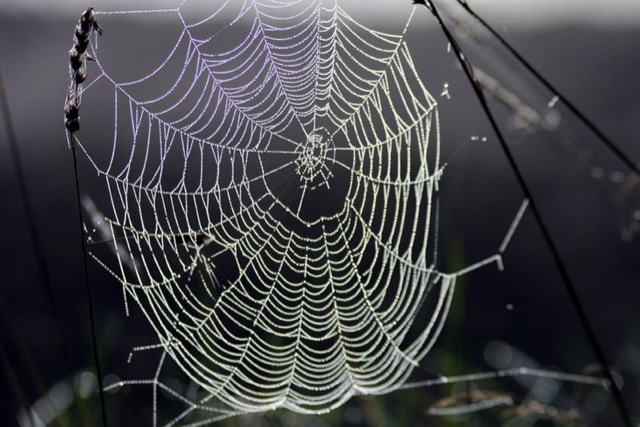 Aprenda um valioso truque para passar a guarda-aranha