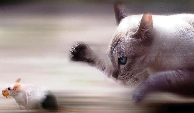 Gato cacando