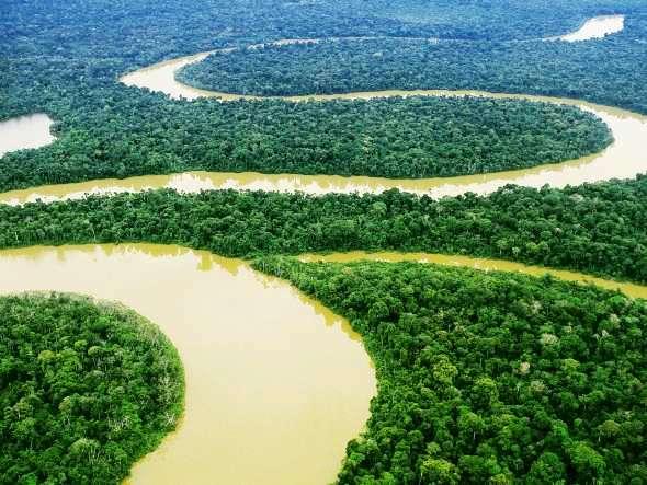 Na semana da Amazônia, relembre Lyoto no Jungle e lute pela floresta