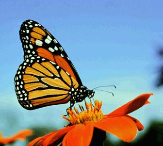 Anule a esgrima e passe a guarda-borboleta com nosso GMA