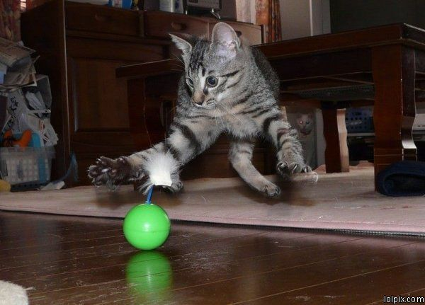 O Jiu-Jitsu inspirado no movimento dos gatos, por Bruno Ramos