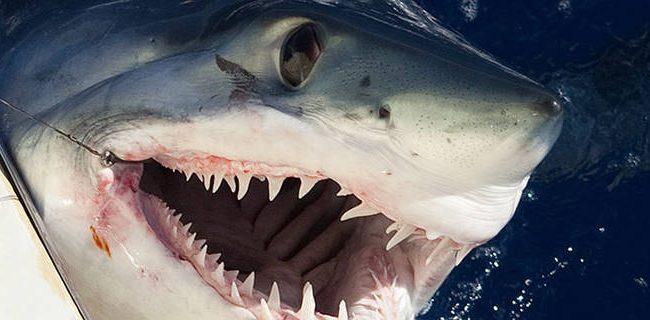 Martial arts > sharks: How MMA technique saved shark attack victim