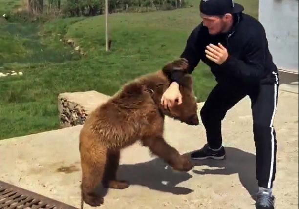 """Vídeo: Khabib Nurmagomedov x """"Urso sparring"""" 2, na Rússia"""
