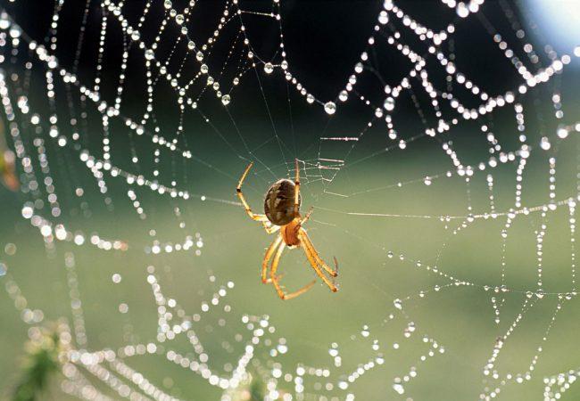 Guarda-aranha: um macete para você raspar e finalizar no Jiu-Jitsu