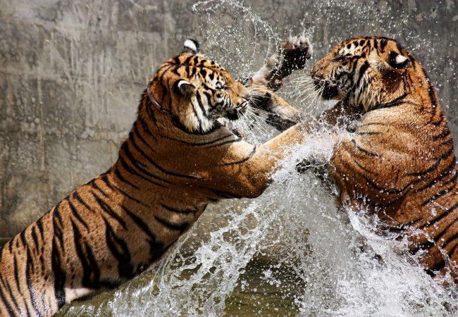 How do you start your Jiu-Jitsu training? Choose your animal and release your beast
