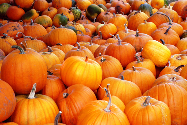 Fast Real Foods: a recipe for a healthy Halloween pumpkin pie