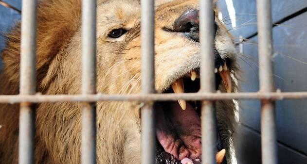 """Quer evoluir no Jiu-Jitsu? Entre na """"jaula dos leões"""""""